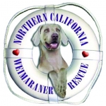 Northern California Weimarnaer Rescue